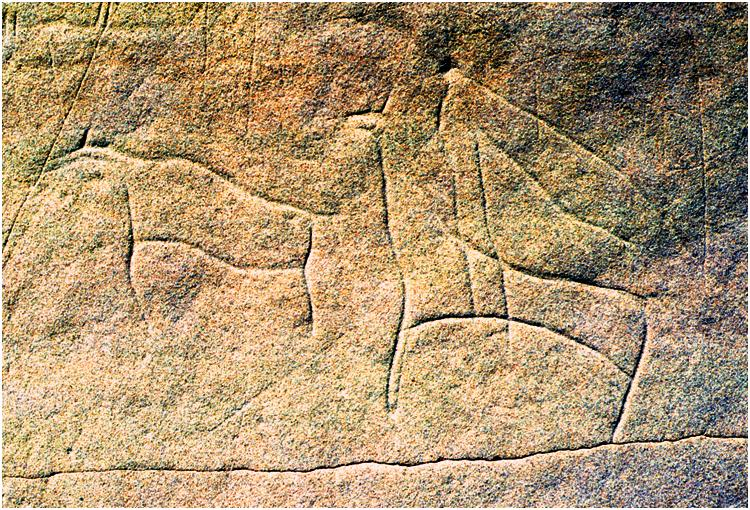 This carving ('petroglyph') from Writing-on-Stone depicts a domestic horse in a buffalo hunt.