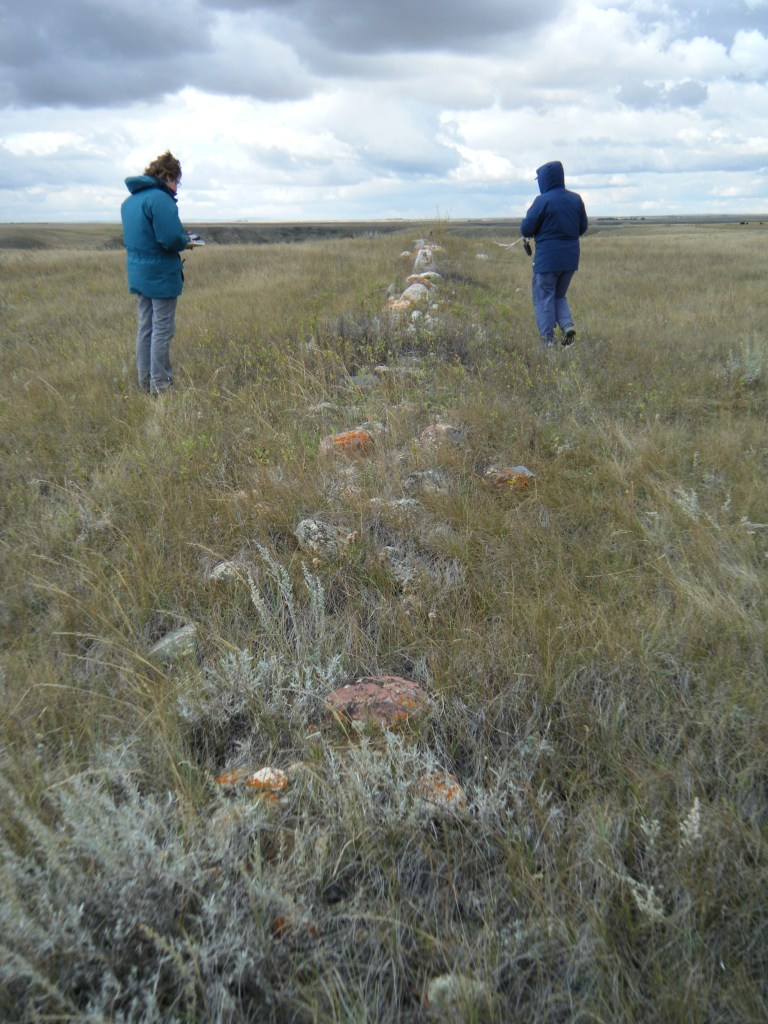 A historic fenceline at Writing-On-Stone Provincial Park being recorded by Alberta Culture & Tourism staff, October 2014. (Photo courtesy of Wendy Unfreed, Plains Archaeologist.)