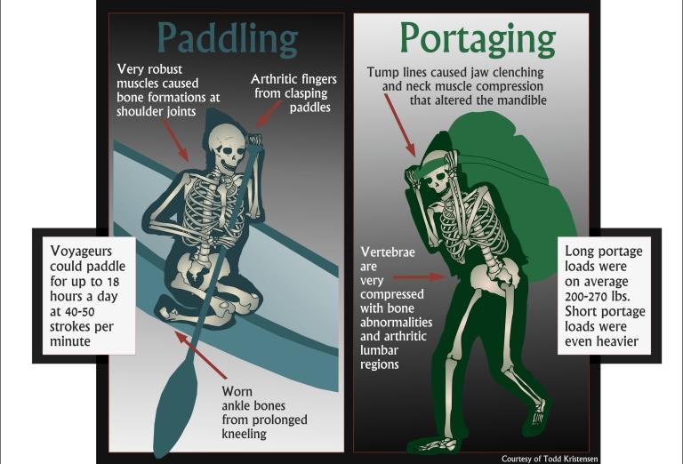 Figure 5. Skeleton fur traders blog