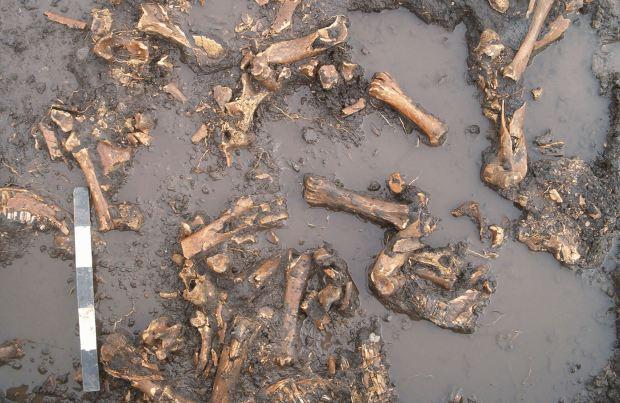 Figure 5. Bone bed Everblue Springs