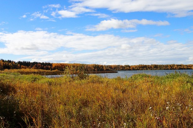 Calhoun Bay Provincial Recreation Area, view of Buck Lake (Photo Credit: Caroline Hudecek-Cuffe)