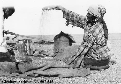 Martha Goodrider (nee Big Plume), Sarcee (Tsuu T'ina), drying berries (Glenbow Archives NA-667-343).