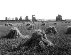 Stavely grain elevators, 1920 (Image: Provincial Archives of Alberta, P659).