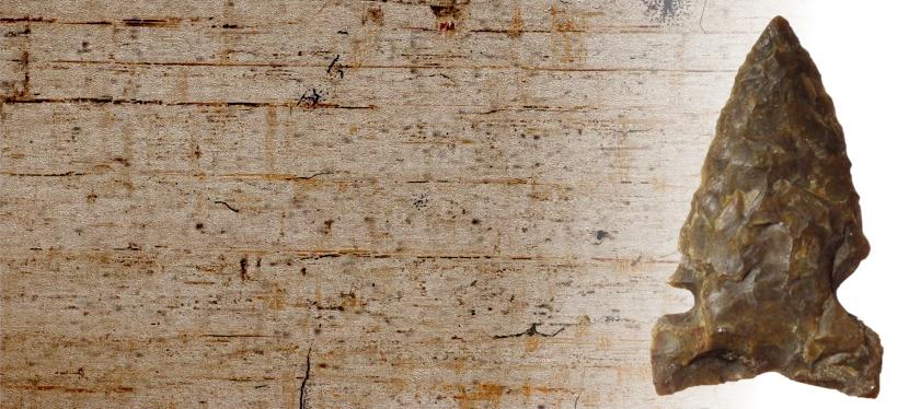 Petrified Wood: Preserving Alberta's Natural and HumanHistory
