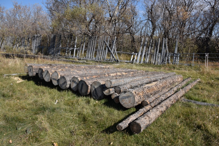 Similar to when the structure was originally built, Lodgepole pine logs were harvested from the surrounding Porcupine Hills. The logs were allowed to dry or season for one year before use. Source: Historic Resources Management Branch.
