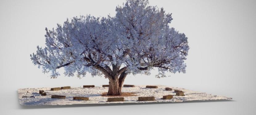 Documenting a Heritage Tree: Digital Preservation of Calgary's StampedeElm