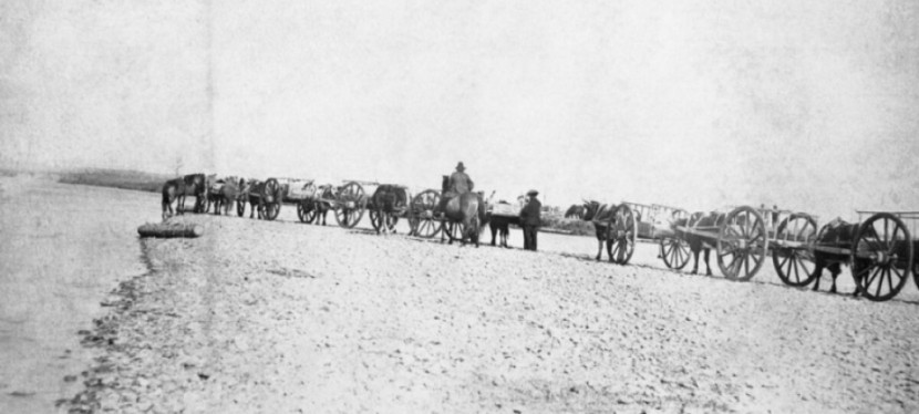 From Buffalo Hunting to Cattle Ranching: The Métis of the BellyRiver